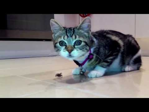 CUTE KITTEN EATS A HUGE SPIDER!!! The death of a spider
