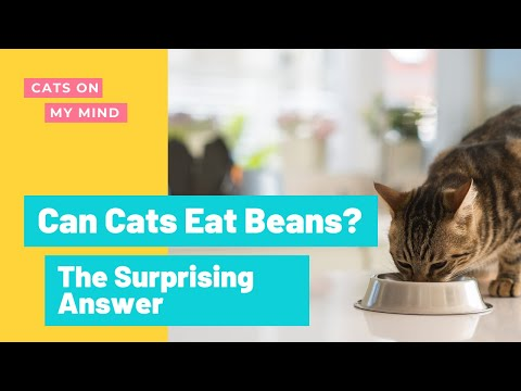 Can Cats Eat Beans? The Answer Will Surprise You!