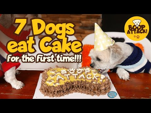 Boop Attack! - My 7 Dogs eat cake for the first time