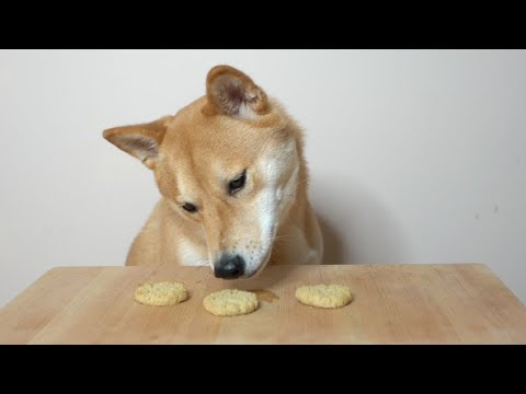 Dog Eats 3 Biscuits for 300,000 Subscribers.