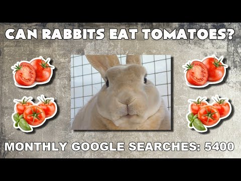 Can rabbits eat tomatoes? Rabbit food answers