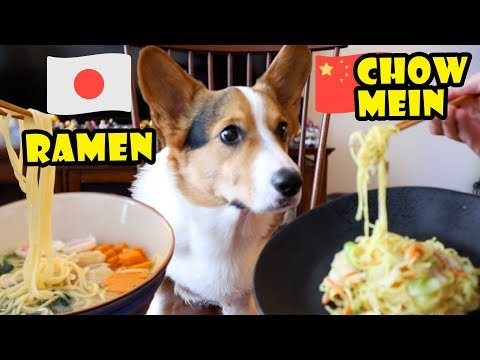 Ramen or Chow Mein? What does the Corgi Dog Like to Eat?    Life After College: Ep. 619